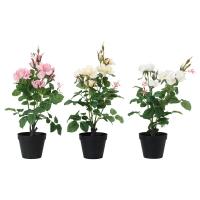ФЕЙКА Искусственное растение в горшке, Роза различные растения