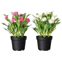 ФЕЙКА Искусственное растение в горшке, Маргаритка многолетняя разные цвета
