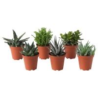 SUCCULENT Растение в горшке, различные растения